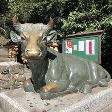 ピカピカの撫で牛