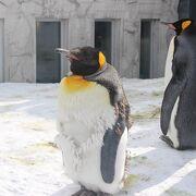 ペンギンで有名な動物ですが、他にも珍しい動物がいます