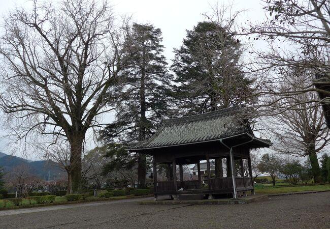 臼杵城跡敷地内にある公園です。大きな銀杏が聳えています!!