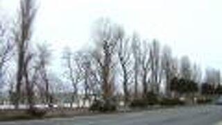 創成川通りのポプラ並木
