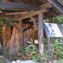 いご坂の大杉跡