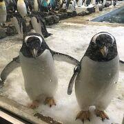 ペンギンもかわいい