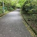 姥子・湖尻自然探勝路