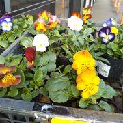 綺麗な季節の切り花やお花の苗木も