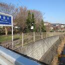 恩田川 さくら道