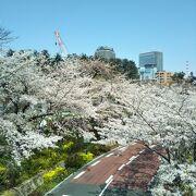 東京ミッドタウンのさくら