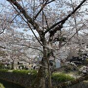 桜八分咲き?満開?の今日、2021年3月27日 初めて全区間制覇