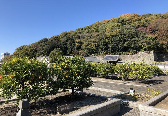 いろいろな柑橘類の木が見られます