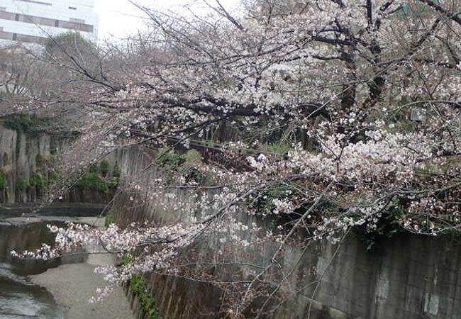 桜がきれい