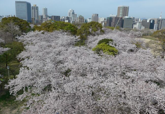 今年の福岡城さくらまつりはライトアップも無くオンライン配信で開催中!!