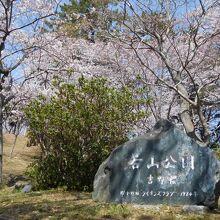 裏側の入り口。吉野桜なのかな?