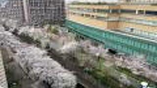 コロナで花見客の少ない落ち着いた石神井川沿線
