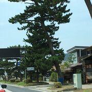 国道沿いの松並木