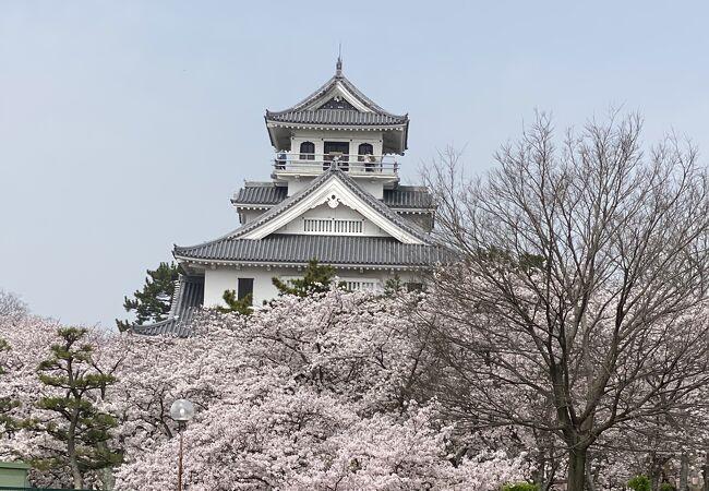 桜に囲まれています