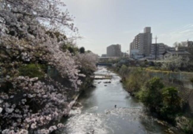 散りゆく桜を眺めながら!