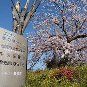 建物の前は桜の名所