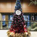 グラデーションのクリスマスツリーが素敵