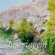 桜のトンネル散歩