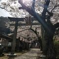桜が綺麗に咲いてました。