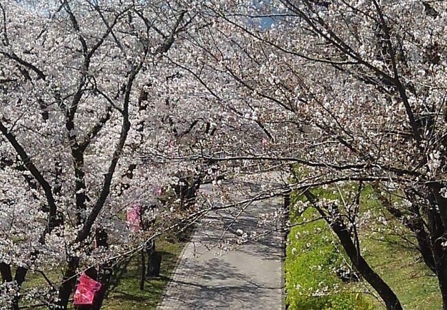 桜の名所大法師公園