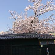 桜が綺麗に咲いていたのが印象的でした