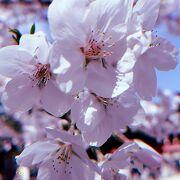 石清水八幡宮へ 再び…桜がキレイ~
