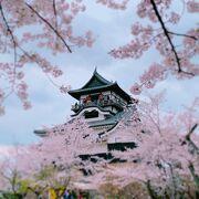 さすが国宝! 江戸自体に建てられた、現存天守です。 桜の時期がオススメ!