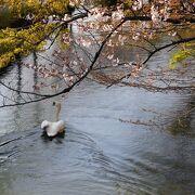 昔倉敷紡績の運河として利用されたが、今は美観地区の中心として美しい景観を見せる