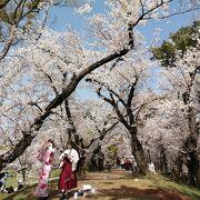 きれいな桜が見れました