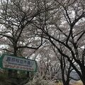 桜並木が素晴らしい