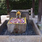2021年桜便り9 金戒光明寺(黒谷)