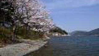 2021年桜便り12 海津大崎