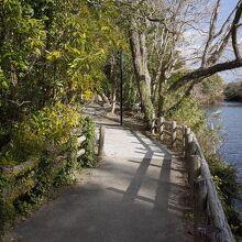 水辺の散歩道
