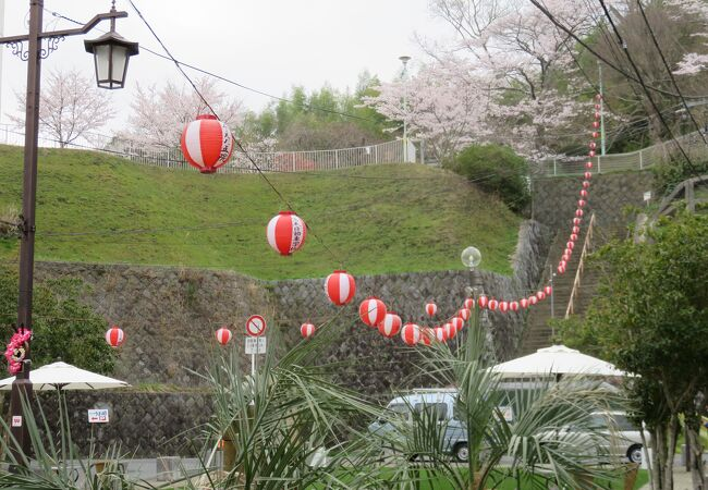 桜満開でも