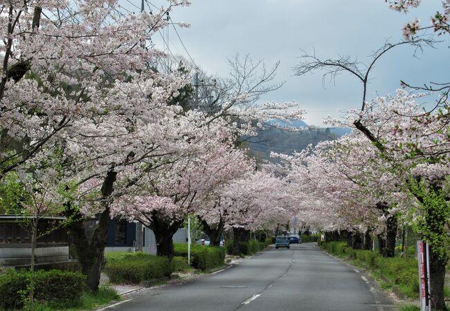 長瀞桜並木