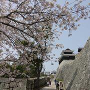 桜の咲く山上の城。本丸売店のお兄さんスタッフに元気をもらえましたw