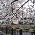 桜が綺麗に咲いていました