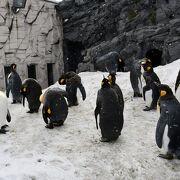 大迫力動物の旭山動物園