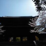南禅寺も桜