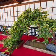 桜は過ぎていましたが、大覚寺やはり良いところです