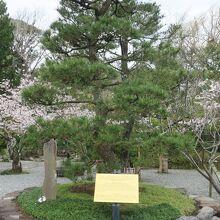 境内の桜の風景