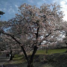 松本城山公園