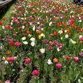 春の花がいっぱい