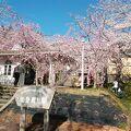桜のトンネルの能登鹿島駅