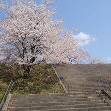 茶屋沼公園の階段