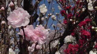 花桃の公園
