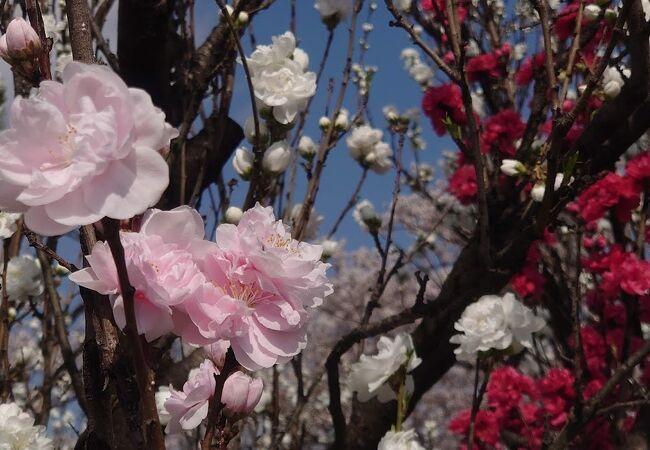 白赤桃色の花が咲き乱れる