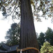 巨大な大杉は神聖な雰囲気