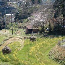 稲淵の棚田