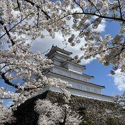 やっぱりお城には桜